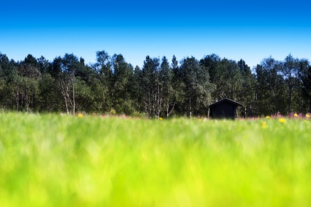 vibrant cottage: Horizontal grass on summer field with cottage bokeh background hd