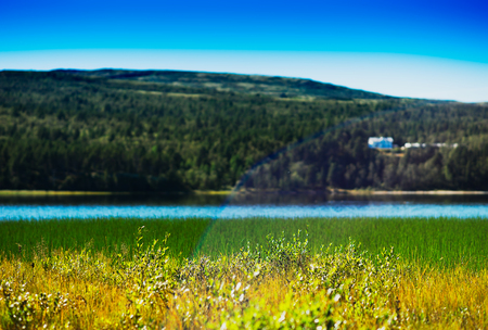 Grass blades in Norway lake with light leak background hd Stock Photo