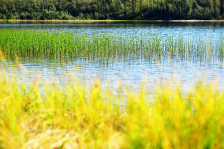 backwater: Grass blades in Norway lake bokeh background hd