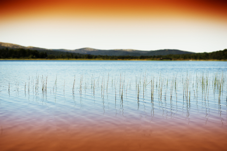 Grass blades in Norway evening lake background hd