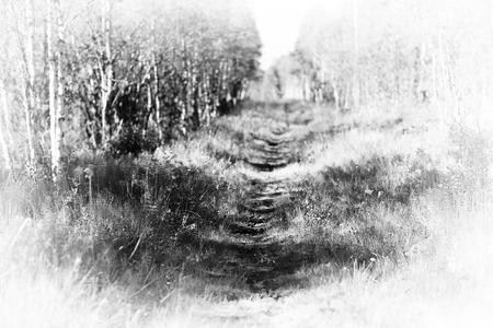 vignette: Forest path vignette background hd Stock Photo
