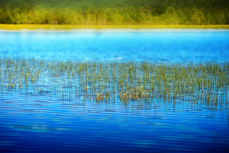 backwater: Grass blades in Norway lake landscape background hd