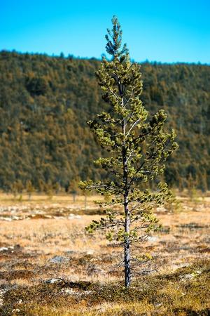 single object: Fir tree single object bokeh background hd Stock Photo