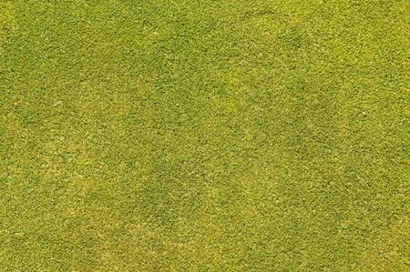 Putting Green Grass flat texture Stock Photo