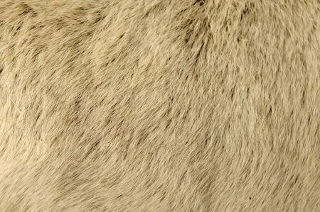 Goat Fur Background Texture