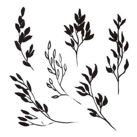 Set of ink drawing wild plants,  monochrome artistic botanical illustration, isolated flon white hand drawn illustration.