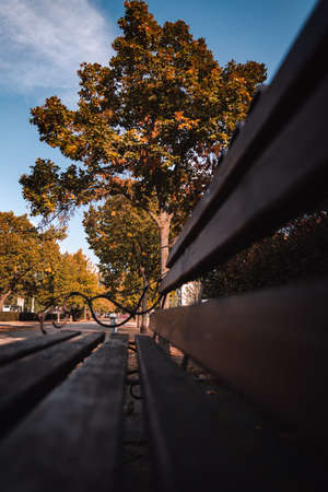 Bench in the autumn park. High quality photo