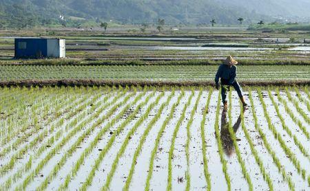 Es ist ein Landwirt Spray Insektizid mit traditionellen Weg auf der Farm.