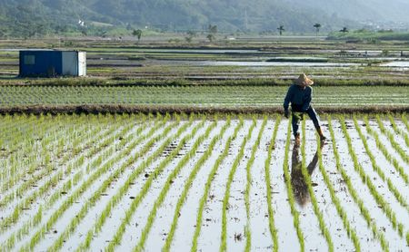 It is a farmer spray insecticide with traditional way on the farm. Stock Photo