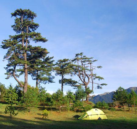 Sch�nen Campingplatz, Baum, gr�ne Gras und blauer Himmel.