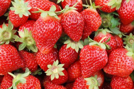 Erdbeere Obst
