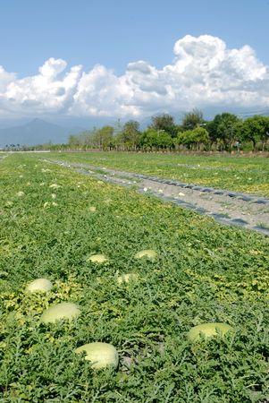 Wassermelone Bauernhof mit sch�nen l�ndlichen Scenic.