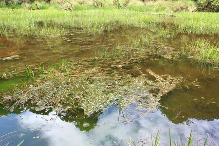 Beautiful marsh scene with reflection blue sky. photo