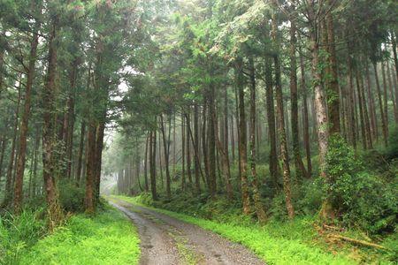 gr�ne Wanderweg