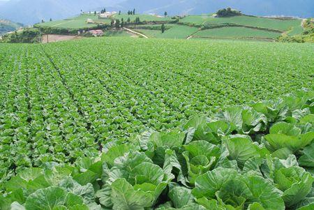 Vegetable farm. Stock Photo