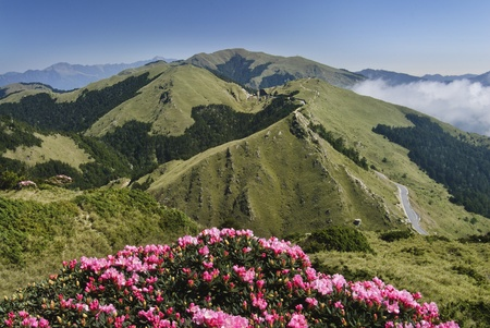 nature landscape with beautiful rhododendron flower in Taiwan. photo