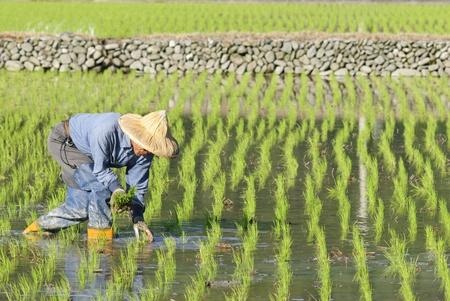 peasantry: farmer. Stock Photo