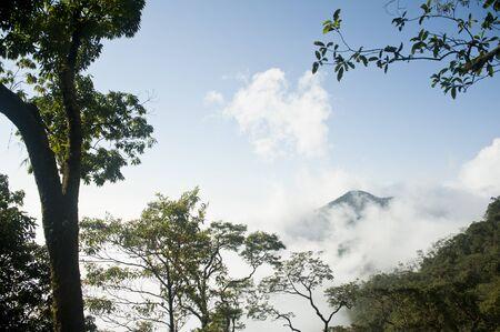Morgenwolke im tropischen Wald, asien