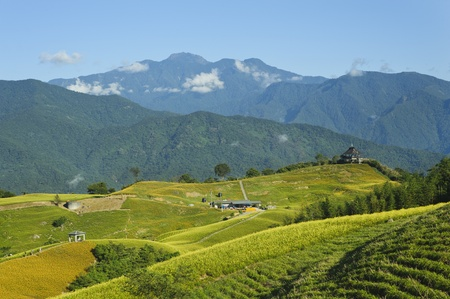 lily flower garden with beautiful mountain scenery in taiwan photo