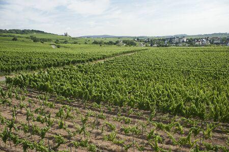 rudesheim: panorama vineyard views of rhine scenery in Rudesheim, Germany  Stock Photo