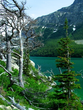 stark: On the left of the scene are two bare bristlecone pines standing in stark white upon a green hillside.  A few boulders and fallen trees cling to that slope which falls toward the green water of St Mary Lake in Glacier National Park, Montana.  A rocky moun