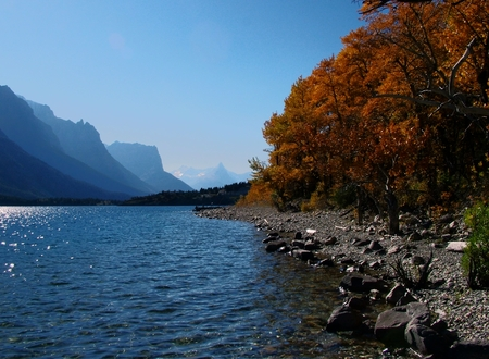 Trees and shrubbery along the rocky edge of St Mary Lake are ablaze with Autumn color.  A soft breeze seems to push the ripples across the surface of the lake between distant hazy mountains and the shoreline.  Above, is a cloudless sky.
