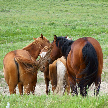 A group of four horses in shades of brown gathers in a close knot tails forward. Surrounding them is a fresh green meadow interspersed with sage and wildflowers.