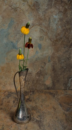Three Wild flowers in an antique silver vase with a slate background