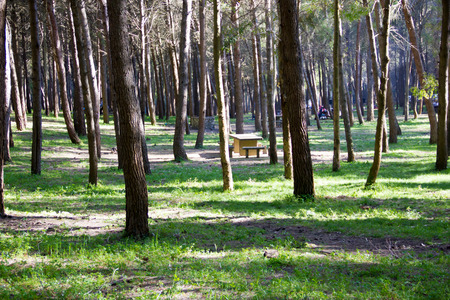 Picnic area in the park in a panoramic view  photo