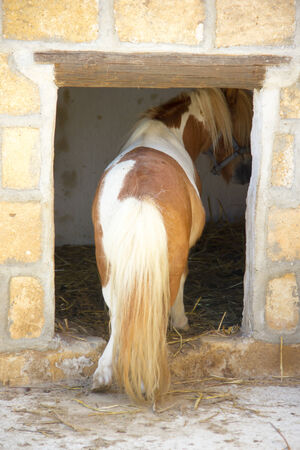 enters: Pony who enters his stall