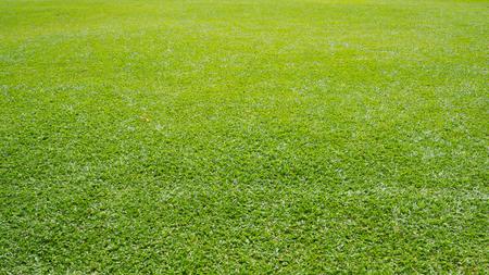 Real fresh green grass field background