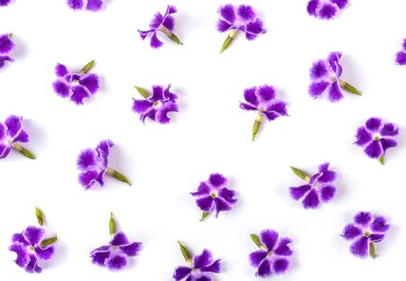 Violet flower isolated on white . top view for background
