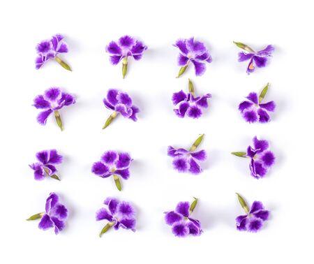 Fleur violette isolée sur fond blanc. vue de dessus