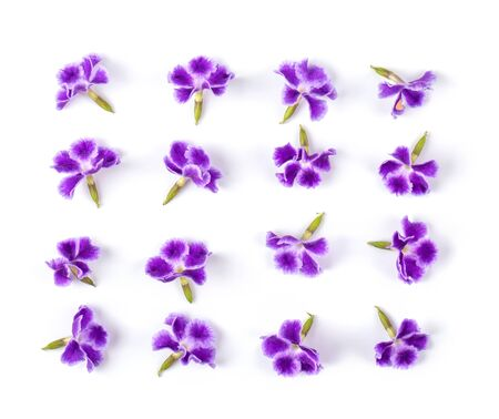 Violet flower isolated on white background. top view Stock Photo