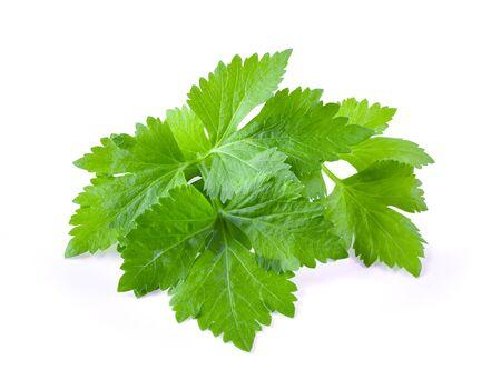 Celery leaf isolated on white background 版權商用圖片