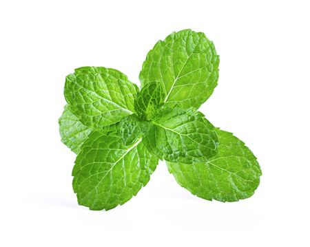 Fresh mint leaf close up on white background . full depth of field