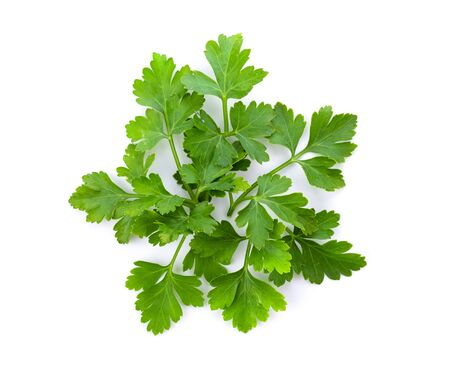 Parsley leaf isolated on a white background. top view