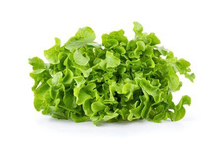 Lettuce vegatable isolated on white background. full depth of field Stockfoto