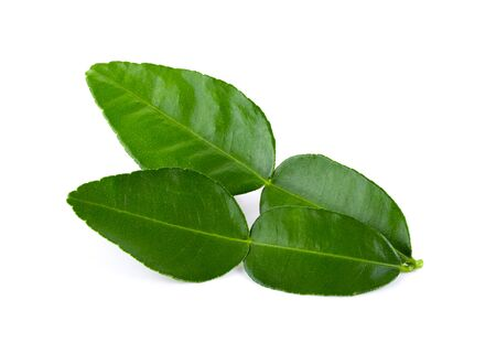 Bergamot leaf isolated on white background. full depth of field Stockfoto