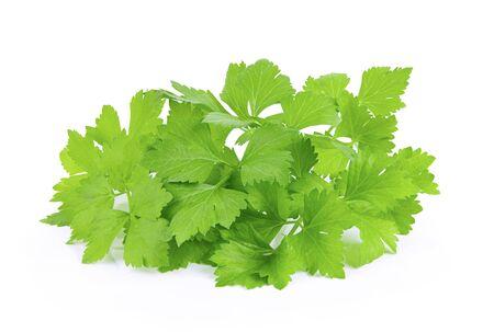 Celery leaf isolated on white background Zdjęcie Seryjne