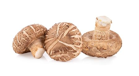 Shitake mushroom on white background full depth of field Stockfoto
