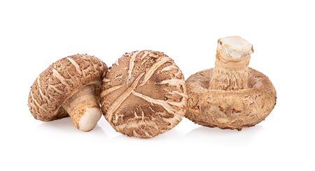 Shitake mushroom on white background full depth of field Stock fotó