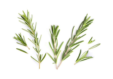 fresh rosemary isolated on white background. Top view Imagens