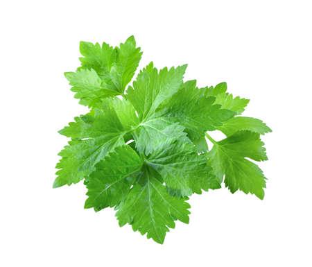 Celery leaf isolated on white background