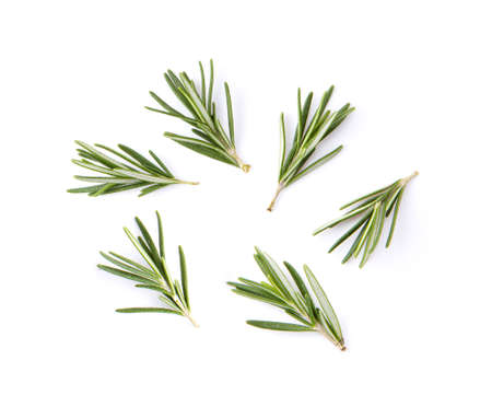 fresh rosemary isolated on white background. Top view