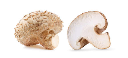 Shiitake mushrooms isolated on white background
