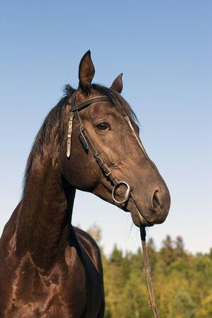 black horse turned his head looks Stock Photo - 14737040