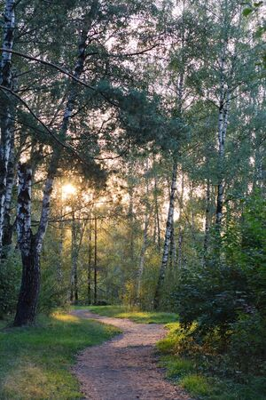 trailway: Trailway meandering through birch alley in the rays of the autumn sun Stock Photo