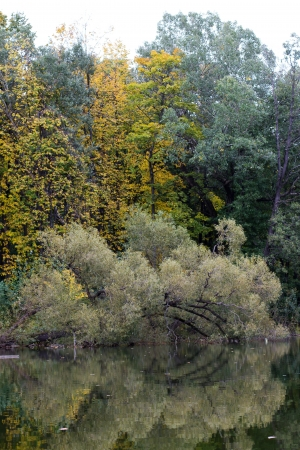 Branchy silver autumn willow reflected in the water of the river Chernavka Balashikha photo