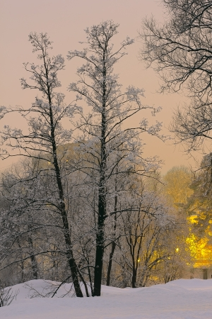 Evening winter park with snow-covered trees and city lights in the background photo